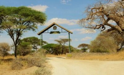 My African Safari - Tarangire Safari Camp