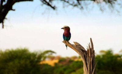 Best African Safari Animals Shots