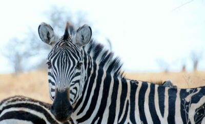 Top 10 African Safari Animal Photos