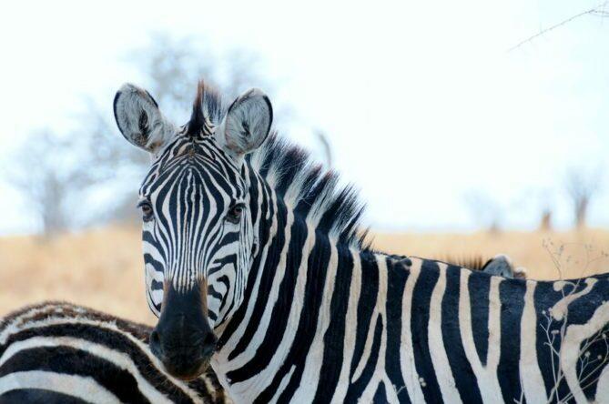 Top 10 African Safari Animal Photos