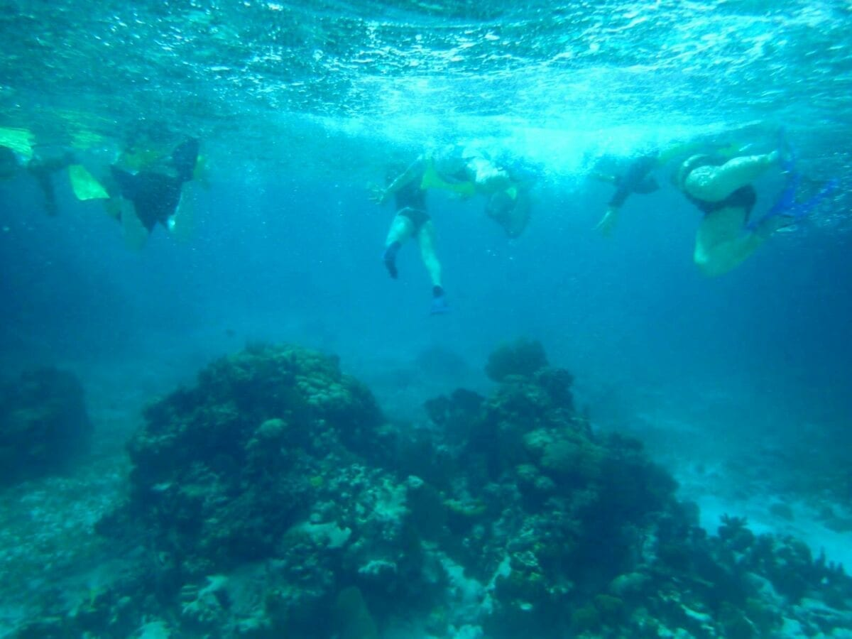 Belize Barrier Coral Reef and Snorkel
