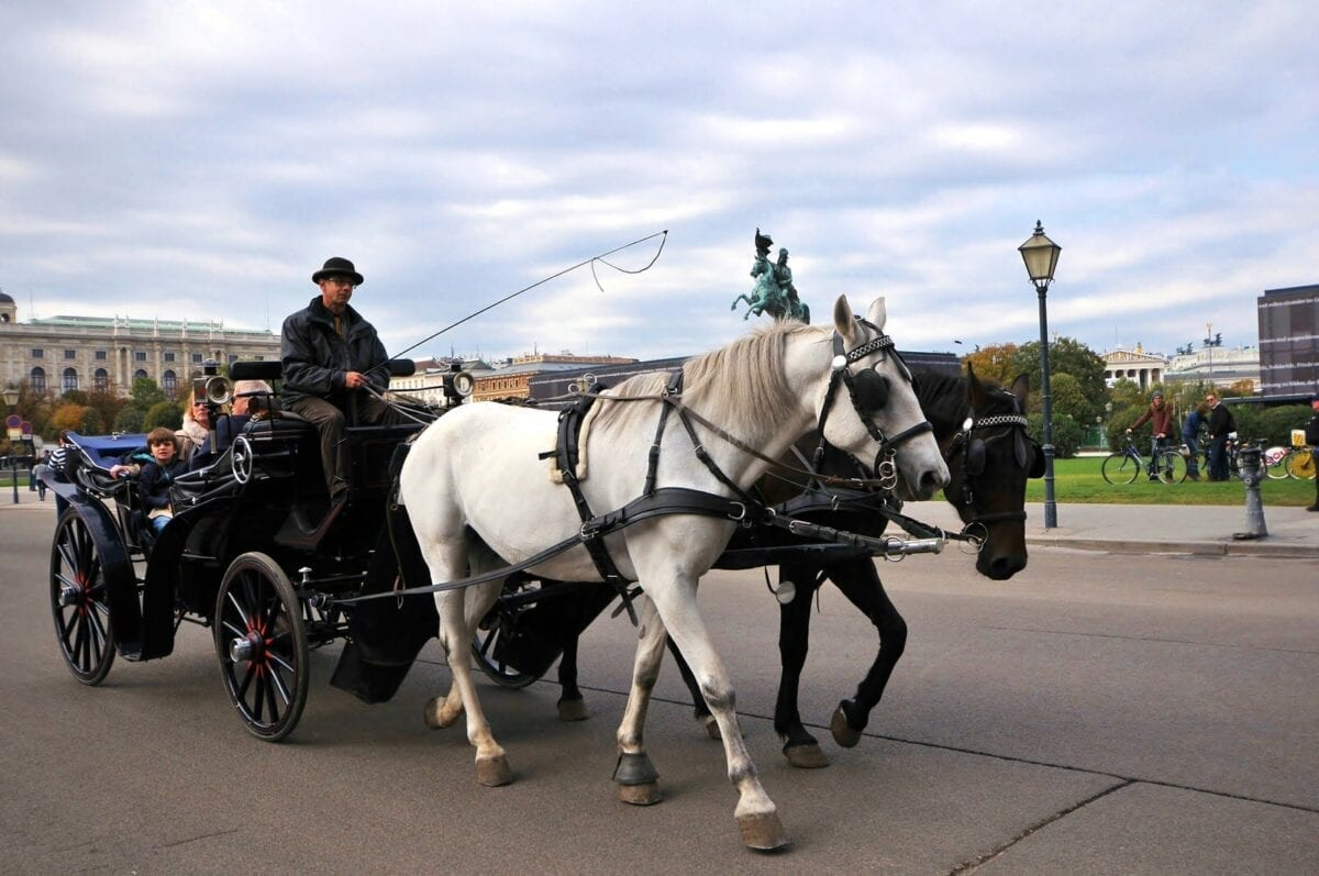 carriage horses vienna