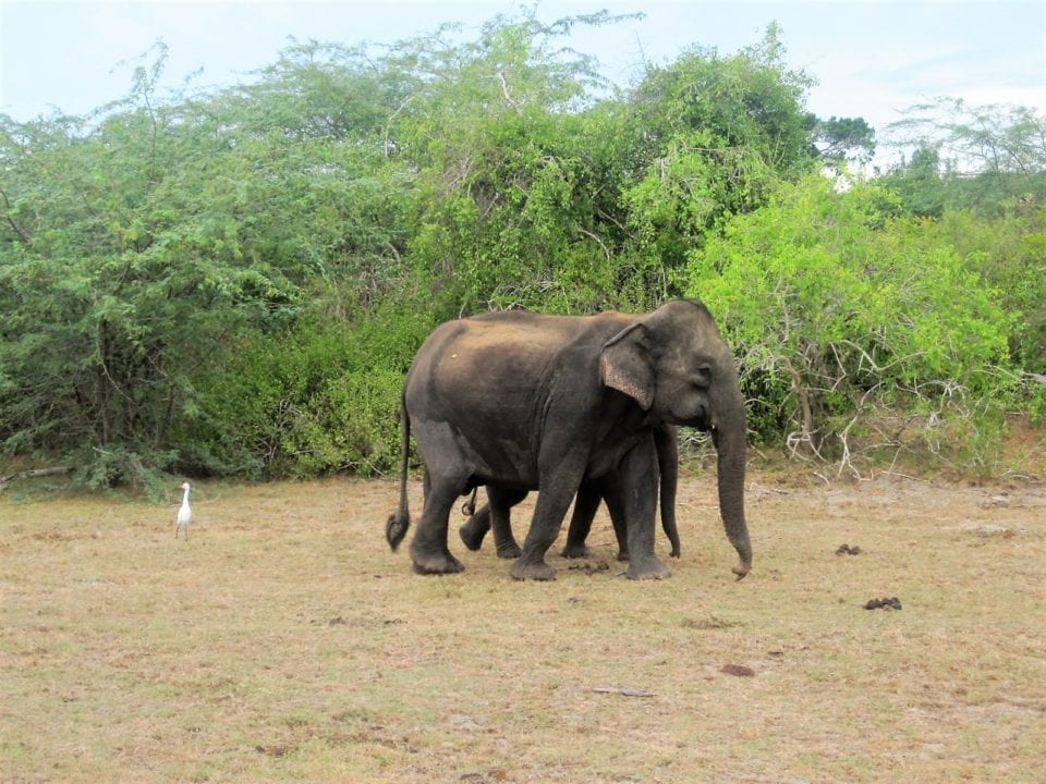 Elephants enjoying the day in Sri Lanka.